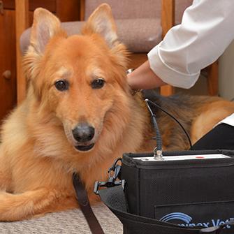 Veterinary Emergency