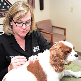 Acupuncture in dogs and cats located in Des Moines IA