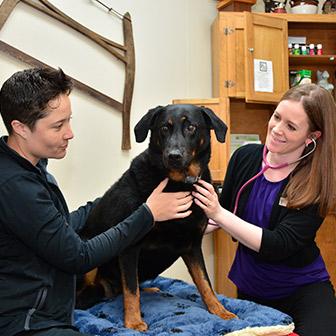 Animal Hospital in Waukee IA