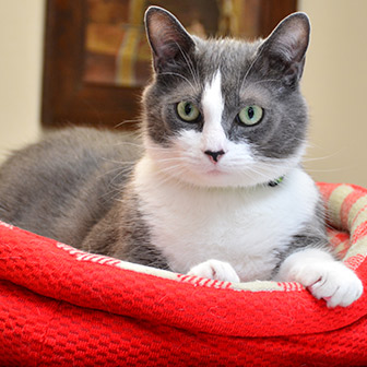 Feline wellness care in Waukee IA