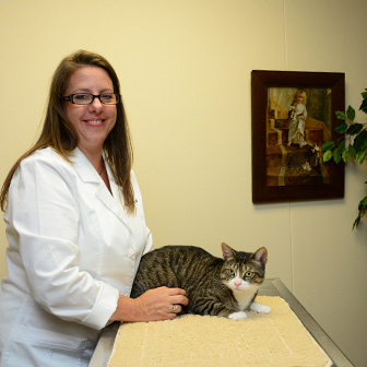 Cat veterinary care at Iowa Veterinary Wellness Center