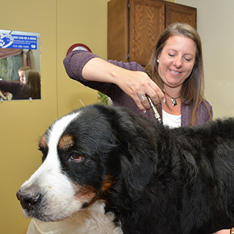 Chiropractic  treatments for dogs and cats located in Des Moines IA