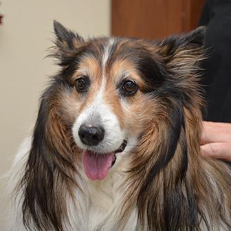 Contact Iowa Veterinary Wellness Center