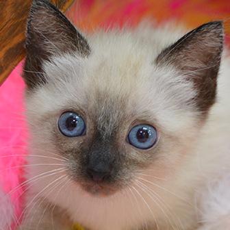 Kitten wellness care in Waukee IA
