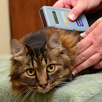 Dog and cat microchipping in Des Moines, IA