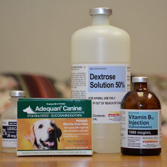 Prolotherapy for dogs and cats in Des Moines IA