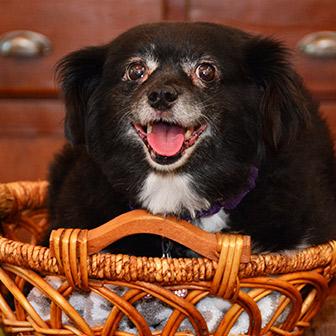 Senior Dog care in Waukee IA