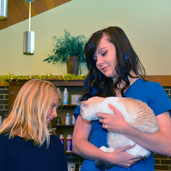 Meet the professional staff at Iowa Veterinary Wellness Center