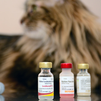 Dog and cat vaccinations in Des Moines, IA
