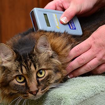 Digital veterinary radiology at Iowa Veterinary Wellness Center